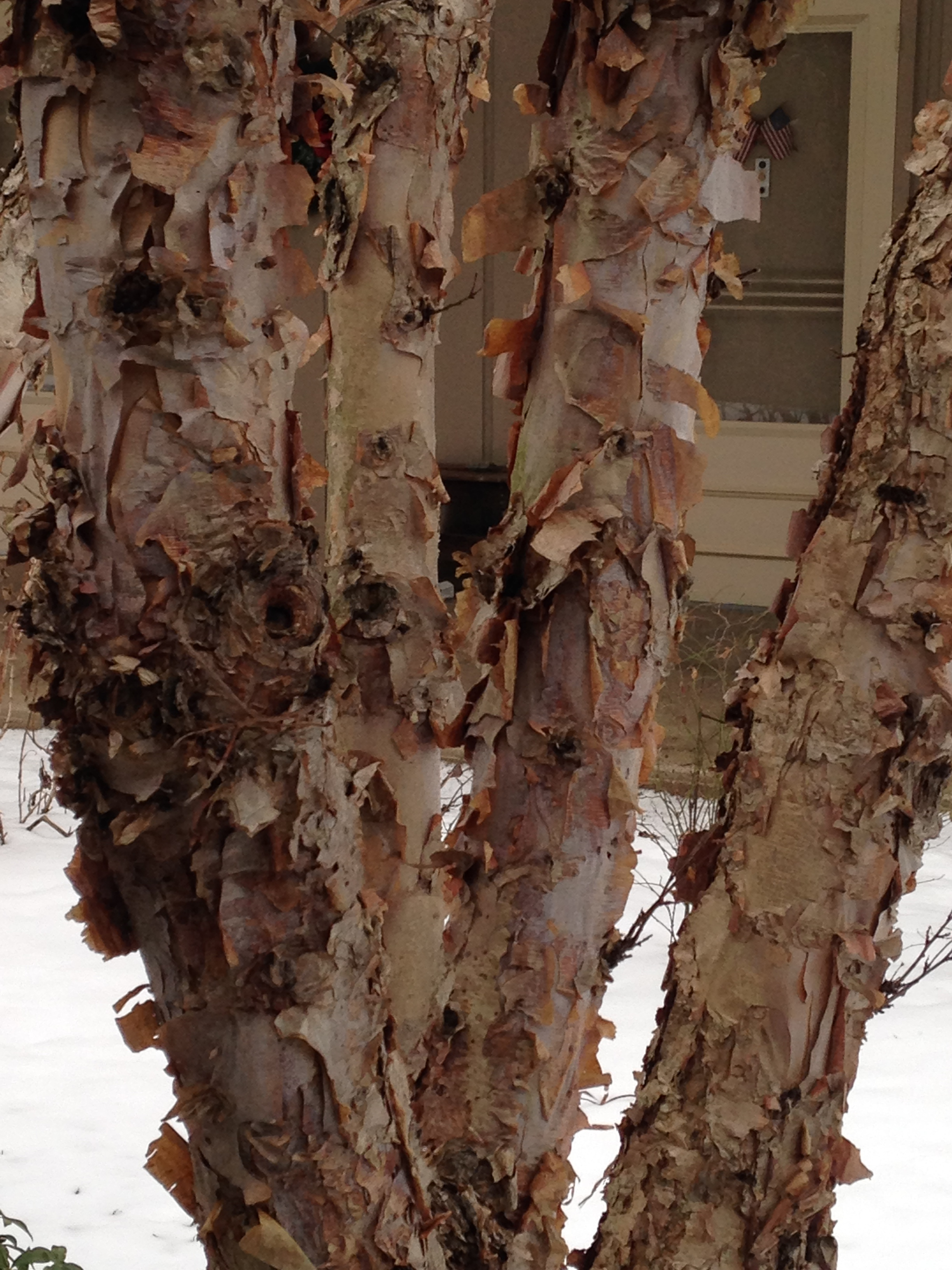 February 8 to 14 – Different Types of Bark – Barton ... Different Types Of Tree Bark