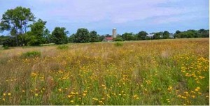 Meadow, photo by Maggie Heineman