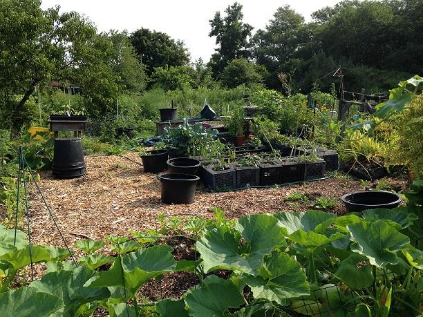 Barton Arboretum Blog