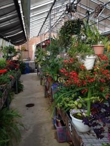 Haddon Greenhouse3